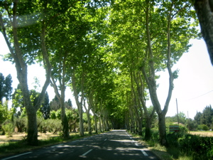 Tree-line road to St. Remy-de-Provence